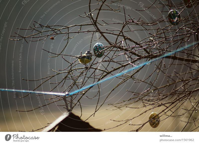meise auf einem kahlen baum mit ostereiern - frühlingserwartung Ostern Osterei Frühling Geäst Meisen Futterhäuschen Wäscheleine Natur laublos Außenaufnahme
