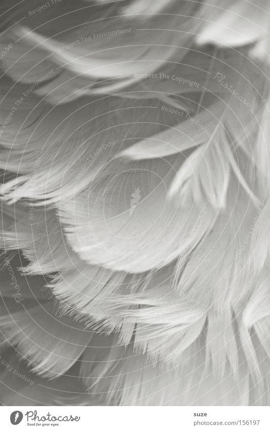 Samtweich Dekoration & Verzierung Flügel Engel weiß Feder leicht zart sanft Daunen Nahaufnahme Hintergrundbild Detailaufnahme Leichtigkeit Bastelmaterial samtig