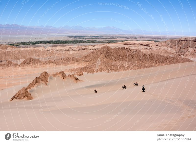 Wüstenritt III Reiten Ausritt Ferien & Urlaub & Reisen Ausflug Abenteuer Ferne Expedition Sand Felsen Salar de Atacama Oase Düne San Pedro de Atacama