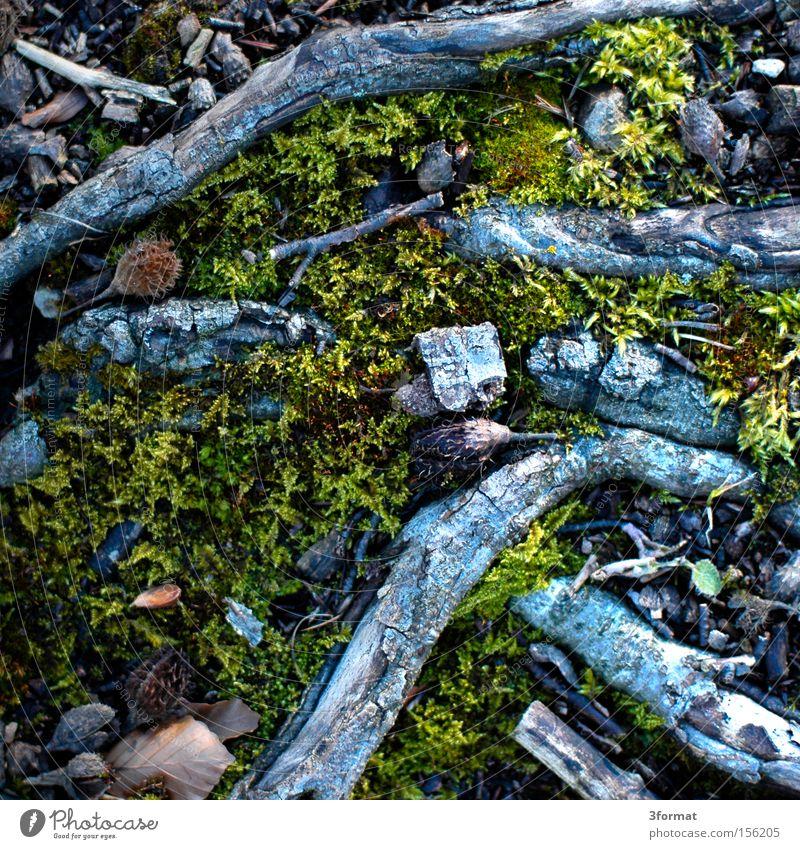 waldboden Natur Berge u. Gebirge Boden Bodenbelag Ast fallen unten Sturz Moos abwärts Kanada Teppich Waldboden Unterholz Richtung