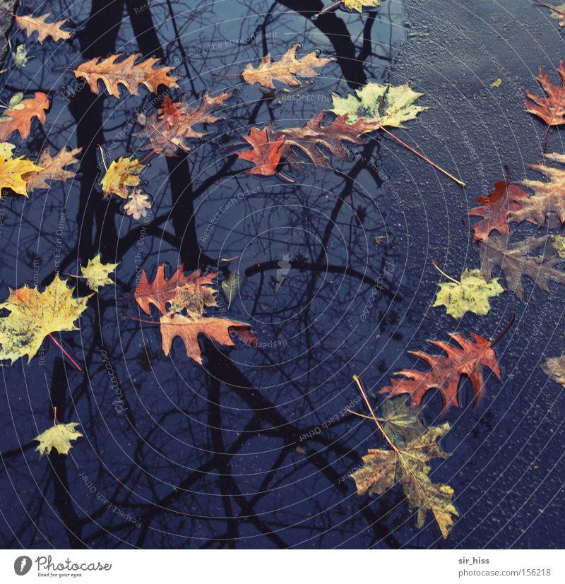 Anfang und Ende Wasser Baum Blatt Herbst Asphalt Vergänglichkeit Verfall Pfütze