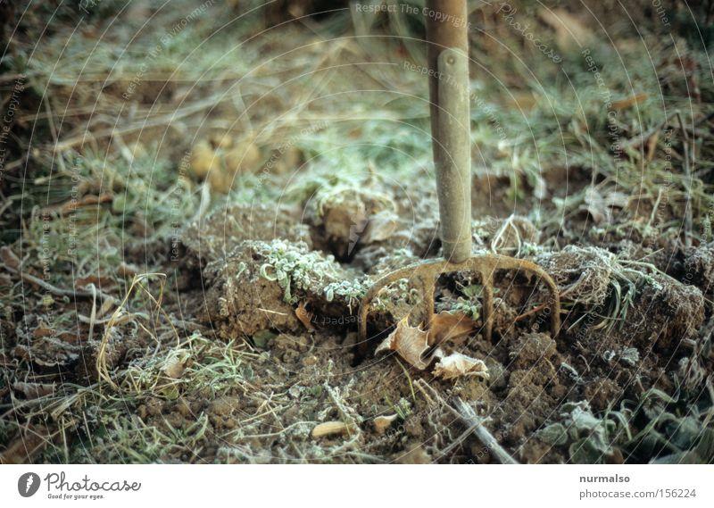 Gestern im Garten Natur Winter kalt Herbst Garten Erde Frost Rasen Blühend obskur gefroren Rost Gerät verblüht Gärtner Graben