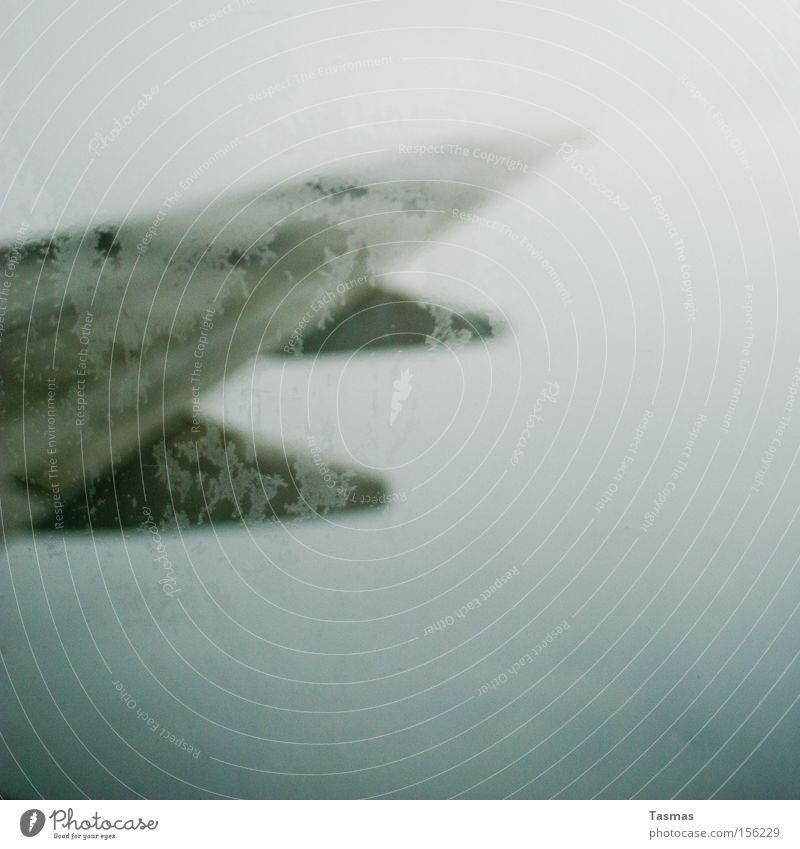 begrenzte Freiheit Himmel Wolken kalt Angst Flugzeug Nebel fliegen Luftverkehr Tragfläche gefroren Fensterscheibe Panik Scheibe begrenzen limitiert