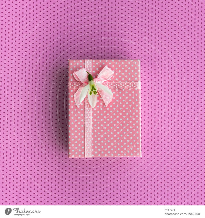 Punkte kaufen Design Freude Basteln Feste & Feiern Muttertag Hochzeit Geburtstag Blume exotisch Zeichen Ornament rosa Geschenkpapier Geschenkband