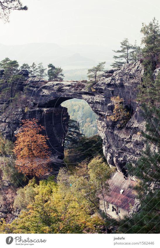 Herbst Natur Landschaft Pflanze Baum Wald Hügel Felsen Berge u. Gebirge alt bedrohlich retro Höhenangst Elbsandsteingebirge Sandstein gefährlich steil
