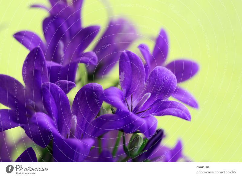 Frühlingsboten III frisch violett positiv Schönes Wetter Wärme Blüte Blühend Frühlingsblume Frühlingstag Frühlingsfarbe Frühlingsfest schön Glück