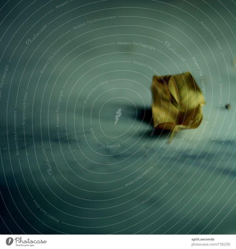 even in the quietest moments ruhig blau gelb Blatt Kreis weich Einsamkeit Herbst Makroaufnahme Nahaufnahme