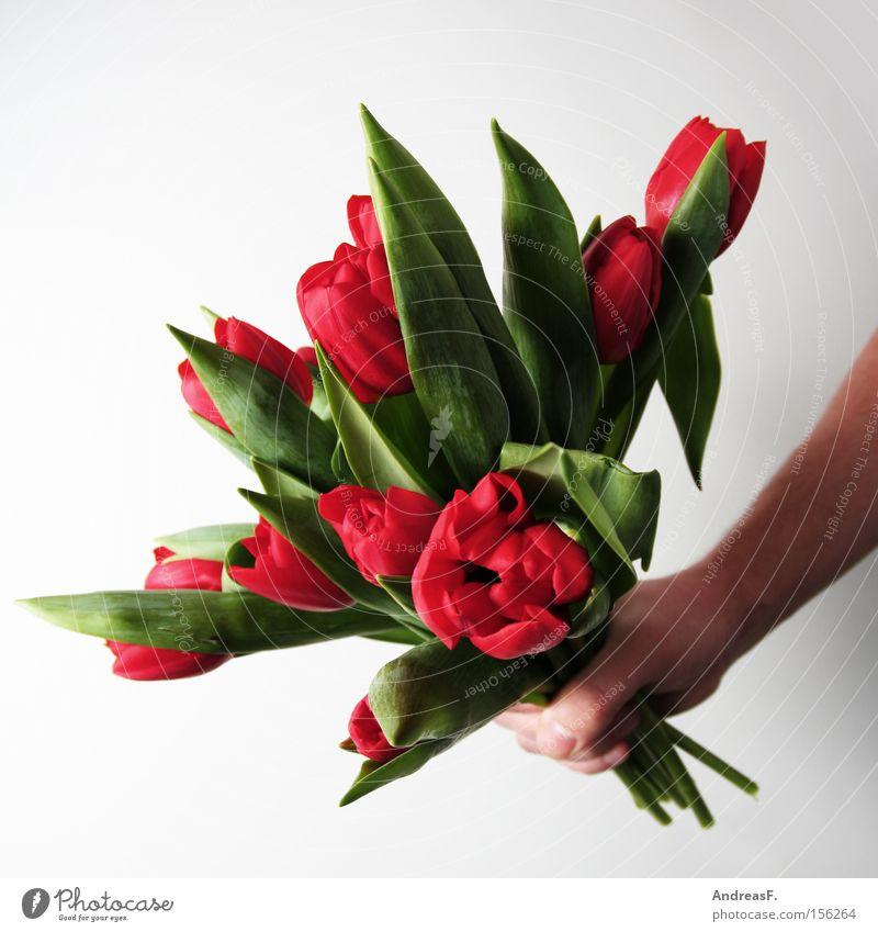 Frühlingsboten Blume rot Freude Jubiläum Geburtstag Geschenk Blumenstrauß Tulpe Valentinstag schenken Muttertag Gratulation