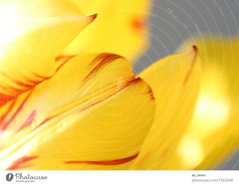 Frühling Lifestyle Wellness Leben harmonisch Sinnesorgane Meditation Ostern Umwelt Natur Pflanze Luft Sonnenlicht Sommer Schönes Wetter Blume Tulpe Garten