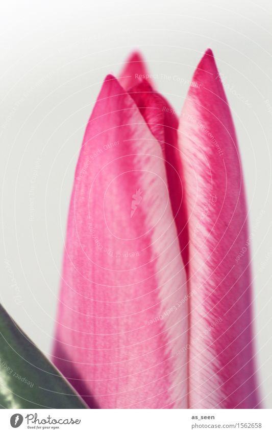 Erwartung Natur Pflanze grün Farbe Blume Umwelt Leben Blüte Gefühle Frühling Stil Lifestyle Feste & Feiern rosa Design Wachstum
