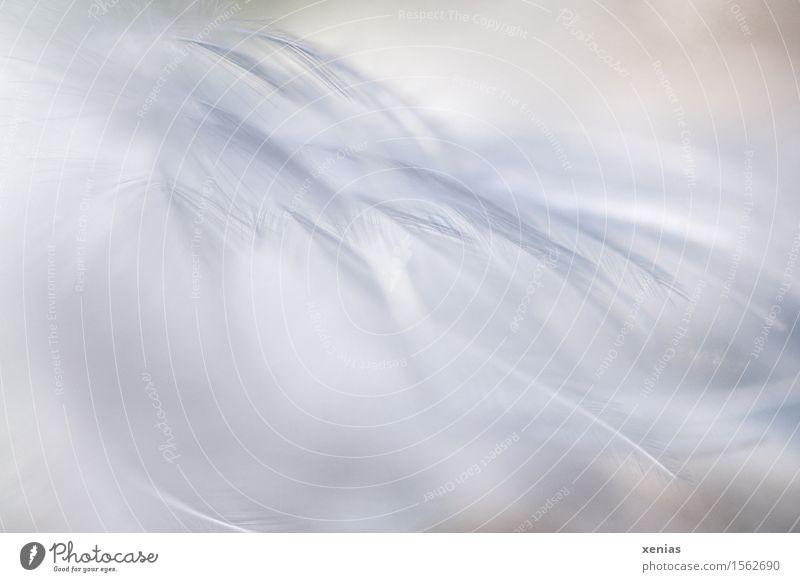 weiße Federn weich Dekoration & Verzierung Vogel fliegen Leichtigkeit leicht zart luftig Daunen Hintergrundbild Nahaufnahme Detailaufnahme Textfreiraum links