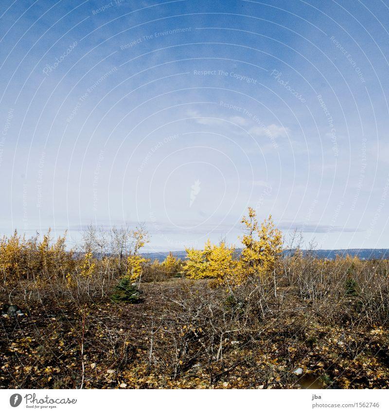 wandern beim Grewingk Glacier - Alaska 28 Zufriedenheit ruhig Ferien & Urlaub & Reisen Ausflug Abenteuer Freiheit Sommer Umwelt Natur Urelemente Herbst