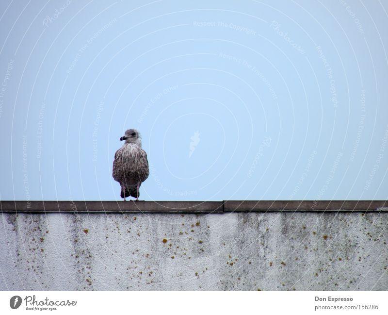 Einsam Möwe Silbermöwe Vogel blau Himmel Meer Küste Einsamkeit Trauer Gefühle Möve Traurigkeit
