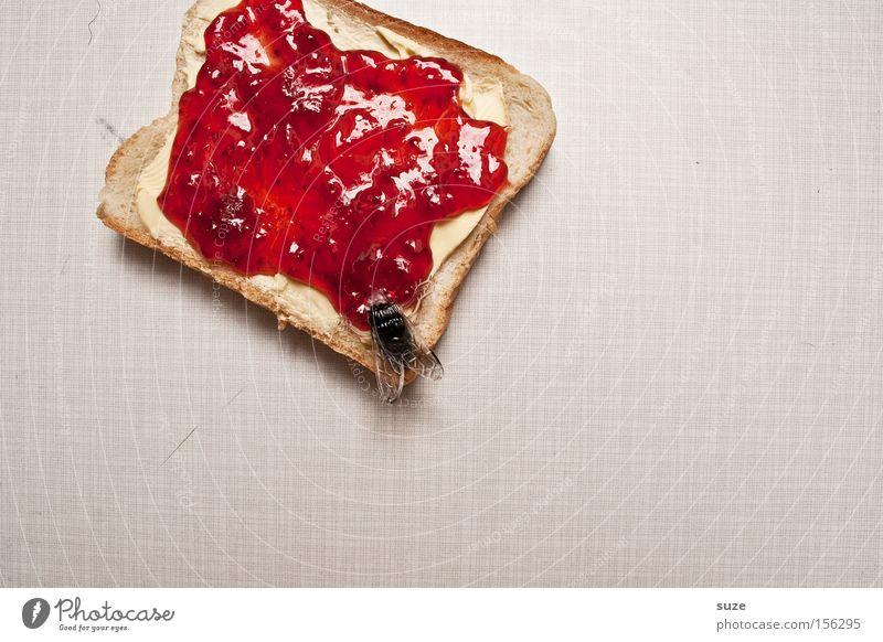 Mampfff ... Schmatzzz lustig Lebensmittel Fliege Ernährung Tisch Dekoration & Verzierung süß Kreativität Küche Idee Kunststoff Insekt Frühstück lecker Brot