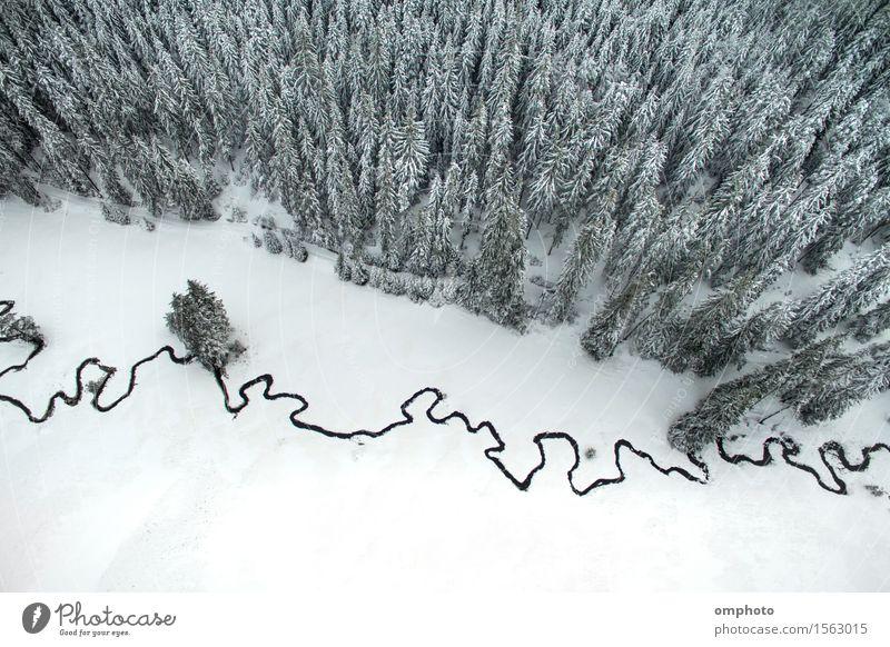 Winterlandschaft mit hohen Kiefern und einem kleinen mäandrierenden Bach schön Schnee Berge u. Gebirge Umwelt Natur Landschaft Baum Park Wald Fluss Hubschrauber