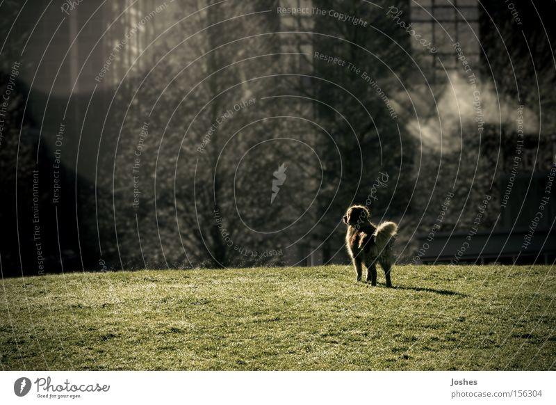 Einsamkeit Garten träumen Hund Park Feld Sehvermögen Lagerplatz