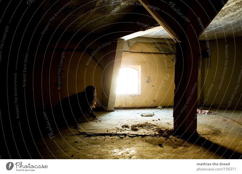 SCHLEICHEKATZE Einsamkeit dunkel schleichen Mann Katze geheimnisvoll Beton schwarz Raum Örtlichkeit Lichtschein schön Loch verfallen Örtlichkeiten