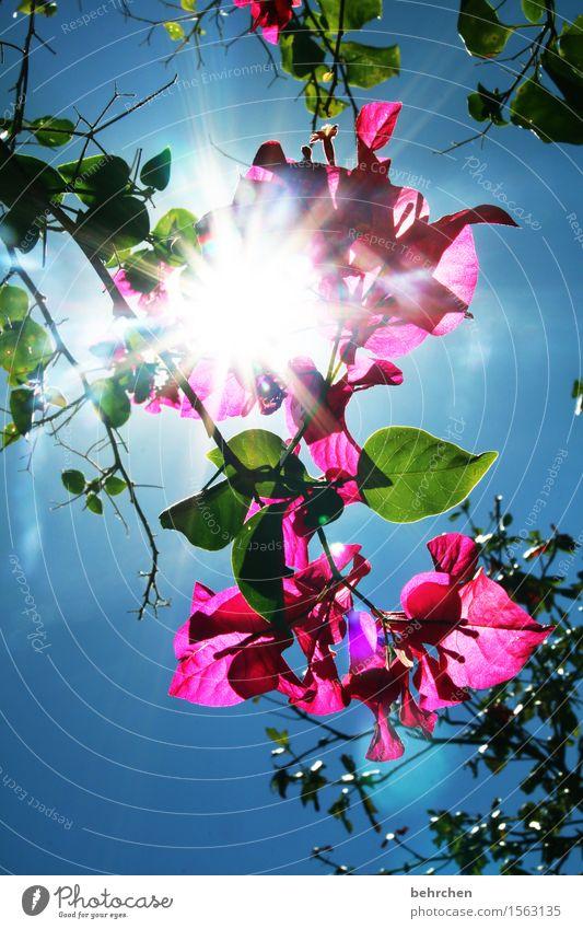 sonnenblume Himmel Natur Ferien & Urlaub & Reisen Pflanze blau schön Sommer Baum Blume Blatt Ferne Wärme Blüte Frühling Garten Freiheit