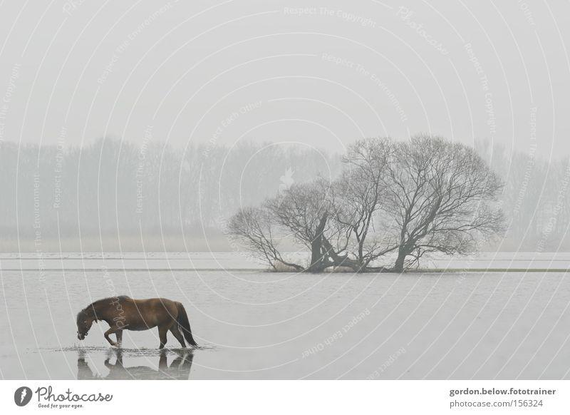 lonely horse Pferd Wasser Einsamkeit Überschwemmung Winter Hochwasser Wäldchen Landschaft verloren Fluss Bach Havellandschaft Hoffnungslosigkeit