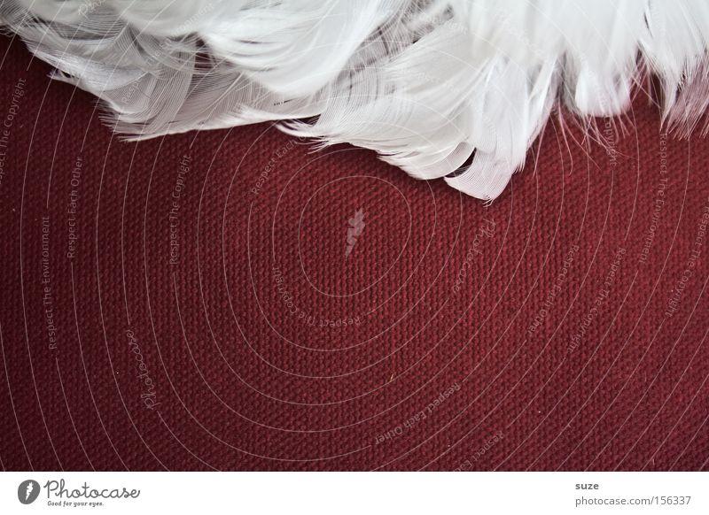 Gans am Rand weiß rot Stil Dekoration & Verzierung Lifestyle Feder Flügel Stoff weich Engel zart leicht Leichtigkeit sanft Bildausschnitt Anschnitt
