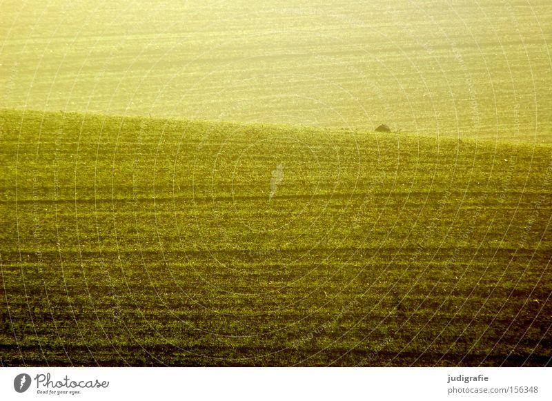 Acker Farbe gelb Linie braun Erde Feld Landwirtschaft Ackerbau ländlich Aussaat Jungpflanze