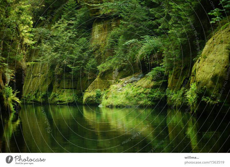 die stille klamm Natur grün Baum Landschaft Felsen Fluss Bach bewachsen Elbsandsteingebirge Tschechien Felsenschlucht Böhmische Schweiz