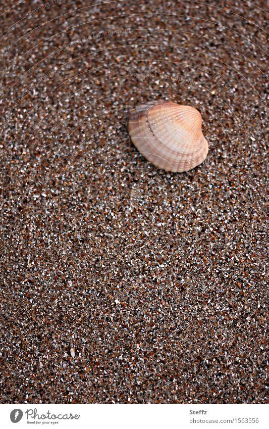 Muschel & Co. III Sommerurlaub Strand Natur Sand Herzmuschel Salzwassermuschel Muschelschale maritim natürlich schön braun Urlaubsstimmung