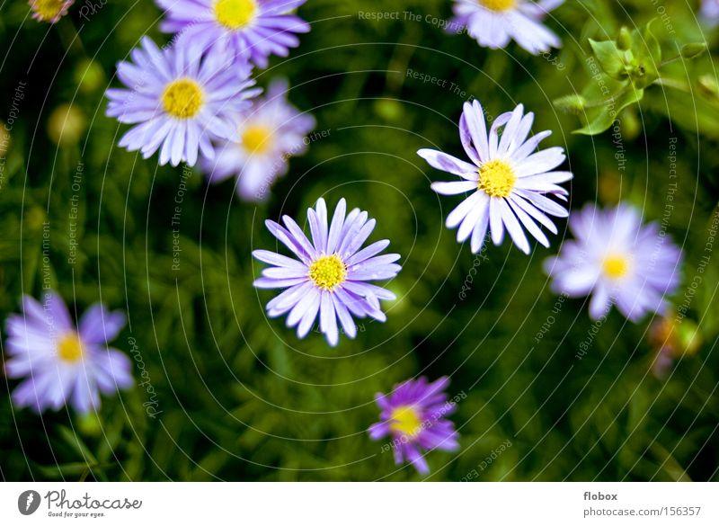 Bald Natur schön Blume grün Wiese Gras Frühling violett Zeichen Blühend Umweltschutz Blumenbeet Frühlingsblume