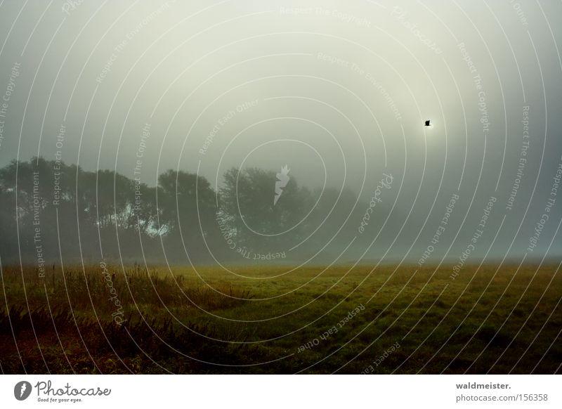 Wiese und Nebel Natur Baum Sonne Wald Wiese Nebel Romantik Gemälde mystisch Märchen unheimlich Dunst Verhext