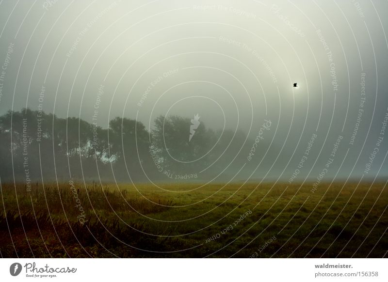 Wiese und Nebel Natur Baum Sonne Wald Romantik Gemälde mystisch Märchen unheimlich Dunst Verhext