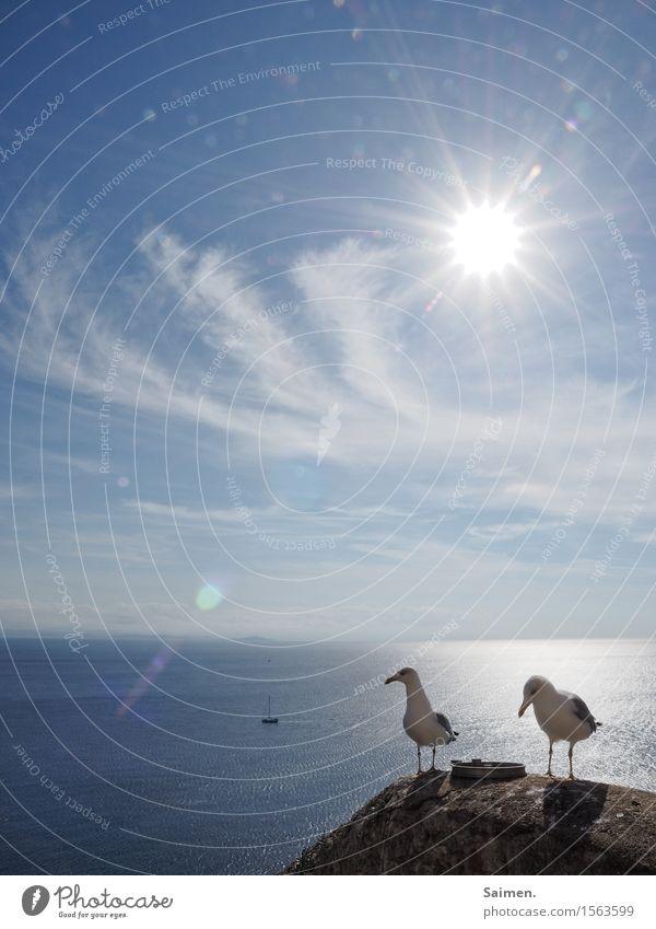 Tach auch! Umwelt Natur Luft Wasser Himmel Horizont Sonne Tier Wildtier Vogel 2 Tierpaar stehen Möwe Wolken Korsika Segelboot Meer maritim Gegenlicht Feder