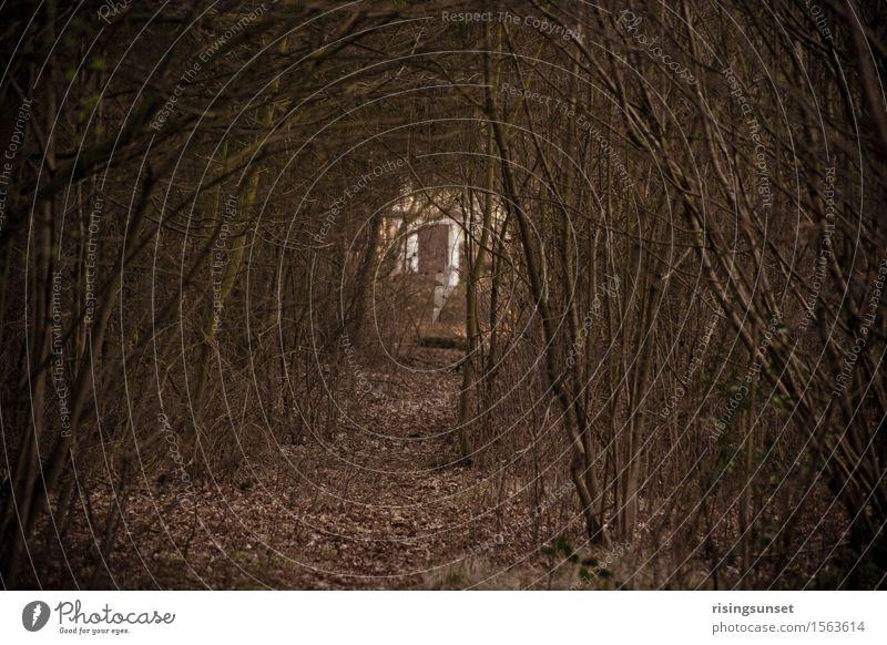 Waldallee Umwelt Natur Herbst Baum Sträucher gehen laufen wandern bedrohlich dunkel gruselig braun schwarz Stimmung Abenteuer Angst Bewegung Einsamkeit