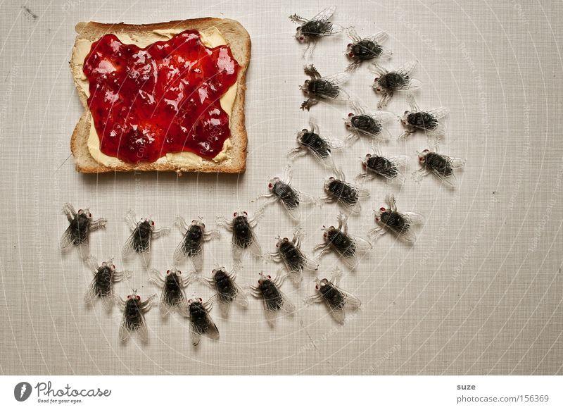 All you can eat lustig Lebensmittel Fliege Ernährung Dekoration & Verzierung süß viele Kreativität Idee Kunststoff Insekt Frühstück lecker Brot Bioprodukte Fasten