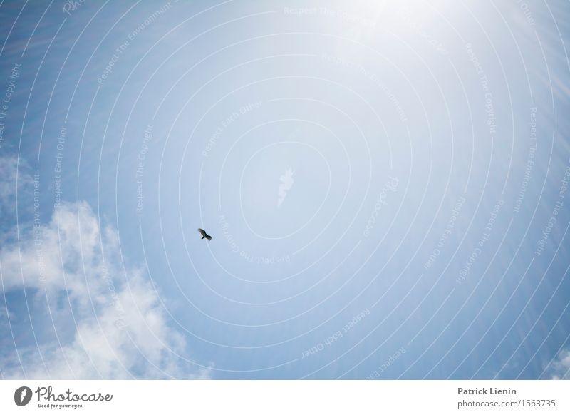 Free like a bird Himmel Natur Ferien & Urlaub & Reisen blau Sommer schön Landschaft Meer Wolken Tier Strand Umwelt Freiheit fliegen Vogel Zusammensein