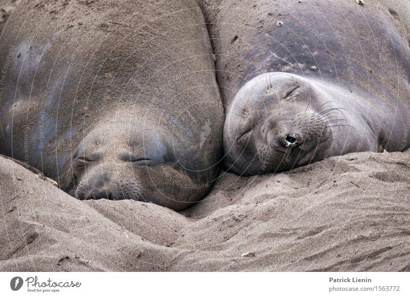 Beste Freunde Natur Ferien & Urlaub & Reisen schön Sommer Meer Landschaft Tier Ferne Strand Umwelt Küste Freiheit Sand Freundschaft Tourismus wild