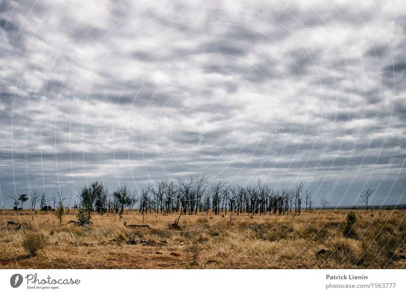 Outback schön Zufriedenheit Sinnesorgane Erholung ruhig Ferien & Urlaub & Reisen Abenteuer Freiheit Expedition Sommer Natur Landschaft Urelemente Erde Himmel