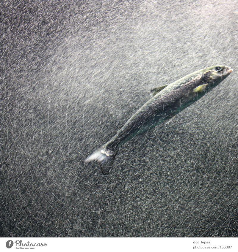 flash did not fire - 3 Wasser Blase Bewegungsunschärfe Aktion fließen tauchen Aquarium Meer dunkel Fisch Schwimmhilfe ganz weit unten Schwimmen & Baden