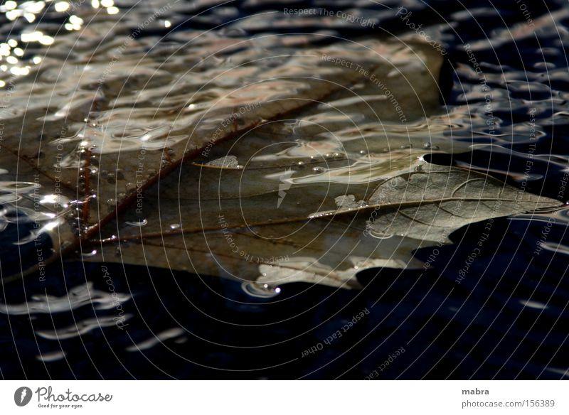 das ende Wasser Blatt schwarz Herbst Tod Trauer verfaulen untergehen Herbstlaub Ahornblatt Vor dunklem Hintergrund