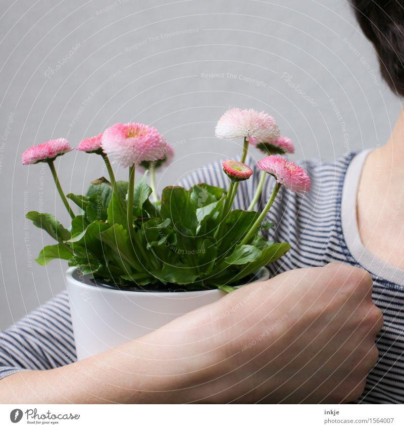Belli für Finti Lifestyle Stil Freude Glück Frau Erwachsene Leben Arme Hand 1 Mensch Frühling Blume Topfpflanze Frühlingsblume Blumenstrauß Blühend festhalten