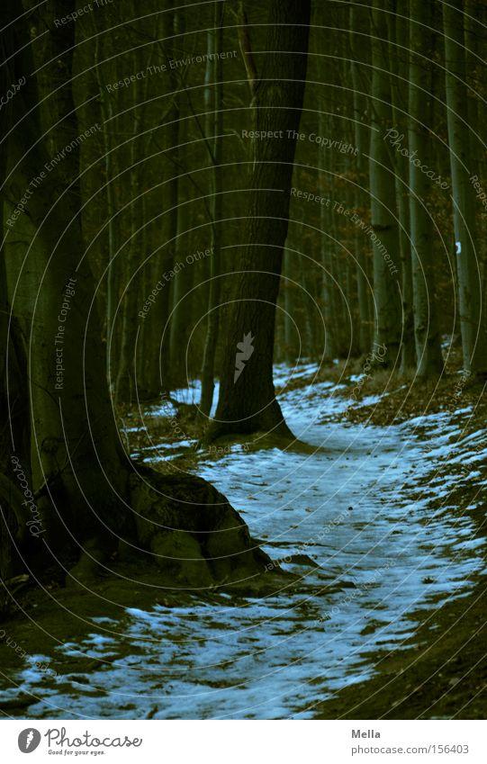 Quo vadis? Baum Winter Wald dunkel Schnee Wege & Pfade Baumstamm Märchen unheimlich Baumwurzel