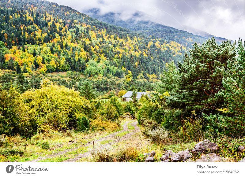 Herbst in den Pyrenäen Himmel Natur Ferien & Urlaub & Reisen Pflanze blau Farbe schön grün weiß Baum Landschaft rot Wolken Blatt Wald Berge u. Gebirge
