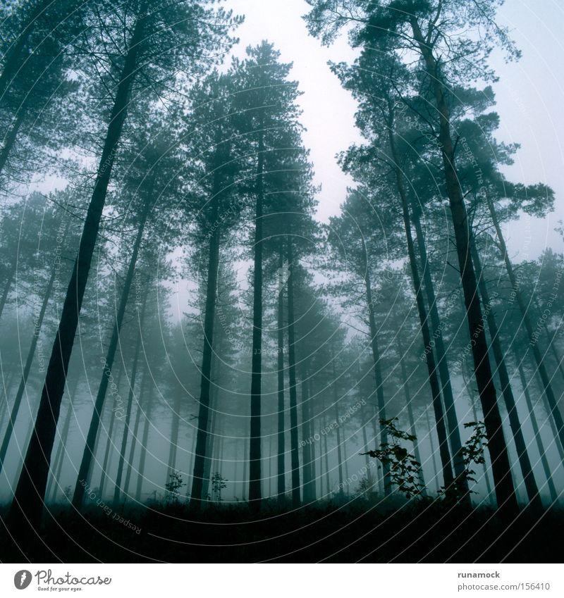 schön Winter Wald dunkel Nebel Wachstum England Dunst Verzerrung