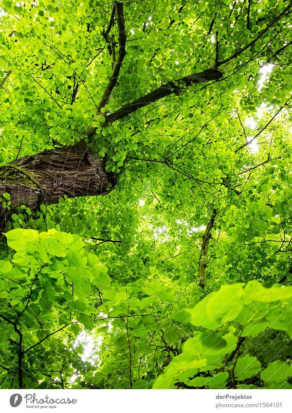 Mitten im Saft stehen Natur Pflanze grün Baum Wald Umwelt Frühling Gesundheit braun Kraft ästhetisch Erfolg groß Lebensfreude einfach Unendlichkeit