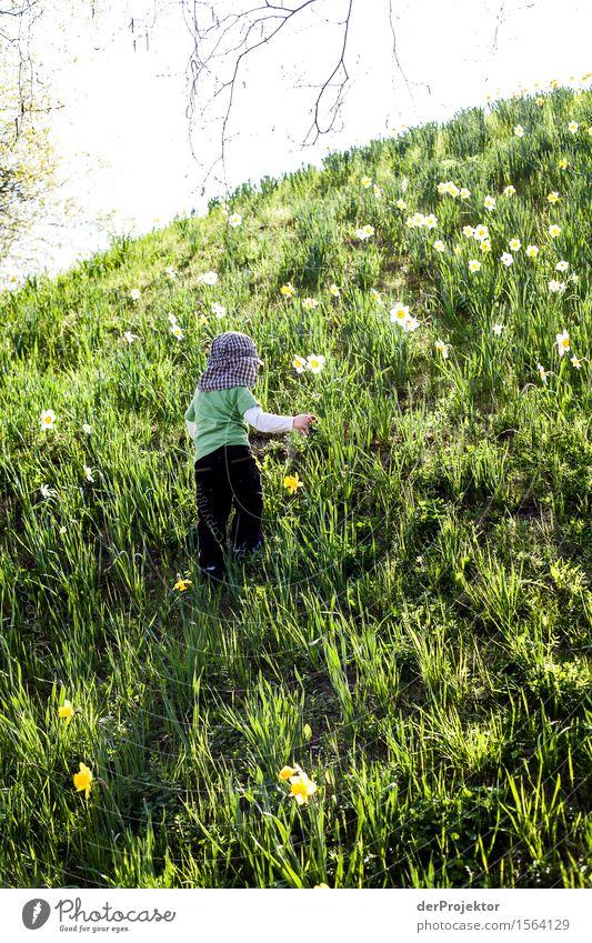 Blumen für Papa pflücken II Natur Ferien & Urlaub & Reisen Pflanze Landschaft Tier Freude Ferne Berge u. Gebirge Umwelt Frühling Wiese Berlin Glück Garten