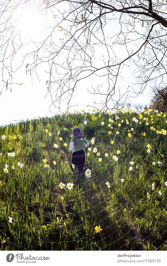 Auf kleinen Schritten dem Frühling entgegen Kind Natur Ferien & Urlaub & Reisen Pflanze Landschaft Blume Tier Freude Ferne Berge u. Gebirge Umwelt Wiese Berlin