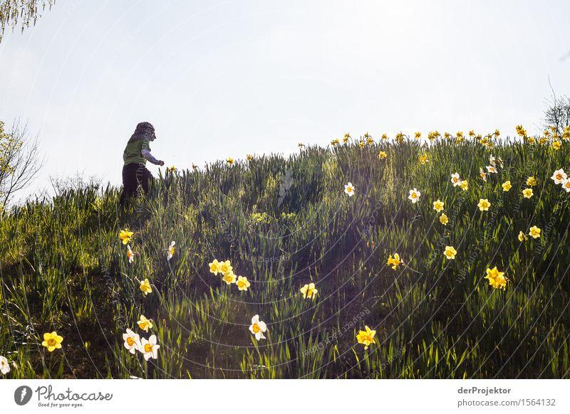 Blumen für Papa pflücken Natur Ferien & Urlaub & Reisen Pflanze Landschaft Tier Freude Berge u. Gebirge Umwelt Liebe Gefühle Frühling Wiese Berlin Garten