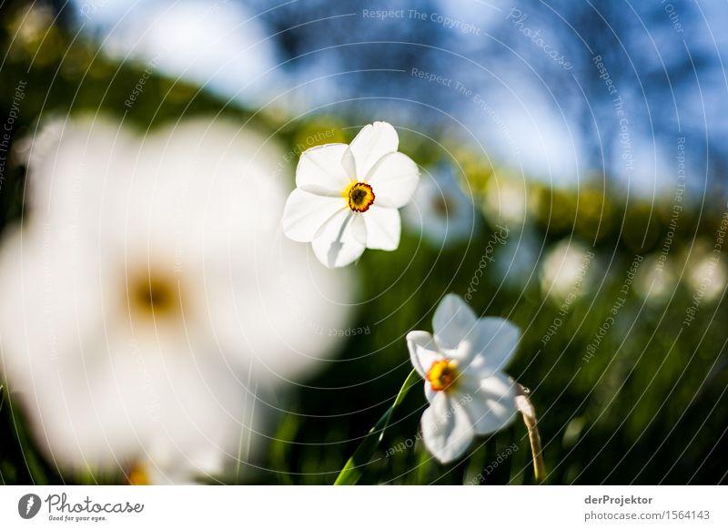 Frühling!!!! Natur Ferien & Urlaub & Reisen Pflanze Blume Landschaft Tier Freude Umwelt Gefühle Berlin Glück Garten Tourismus Park wandern