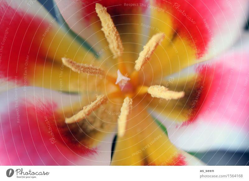 Kaleidoskop Wellness Leben harmonisch Dekoration & Verzierung Umwelt Natur Pflanze Frühling Sommer Blume Tulpe Blüte Blütenblatt Staubfäden Pollen Stempel