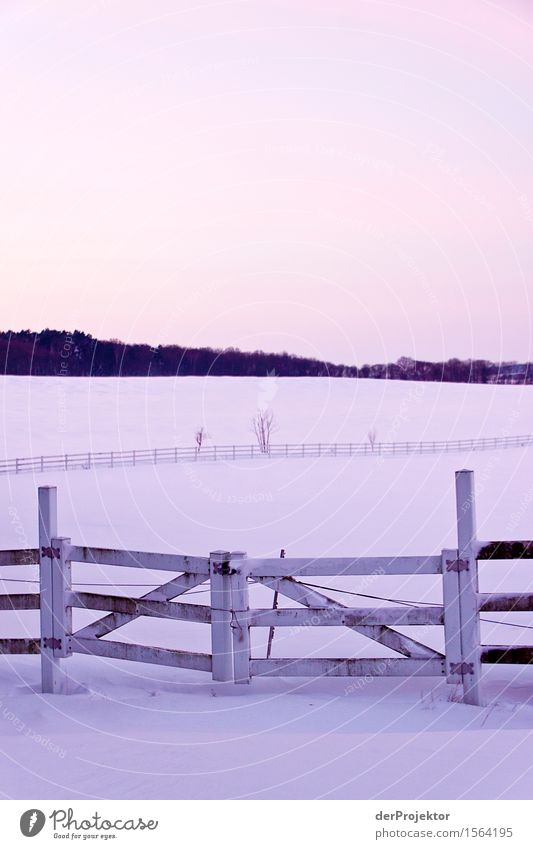 Den Winter schön im Gatter lassen. Natur Ferien & Urlaub & Reisen Pflanze Landschaft Ferne kalt Umwelt Gefühle Wiese Schnee Freiheit Tourismus Feld Eis wandern