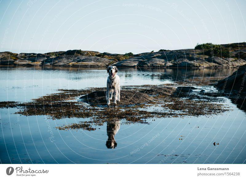 Hundeseelenallein Natur Landschaft Wasser Wolkenloser Himmel Schönes Wetter Küste Seeufer Flussufer Bucht Insel Lyngør Norwegen Tier Haustier 1 atmen